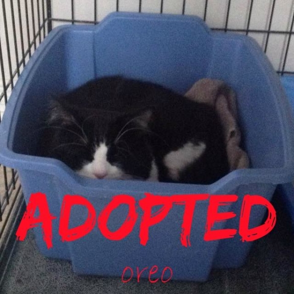 Oreo - ADOPTED - March 26, 2017