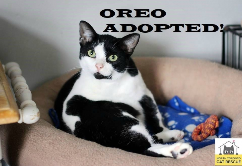 Oreo-Adopted-on-March-23-2019