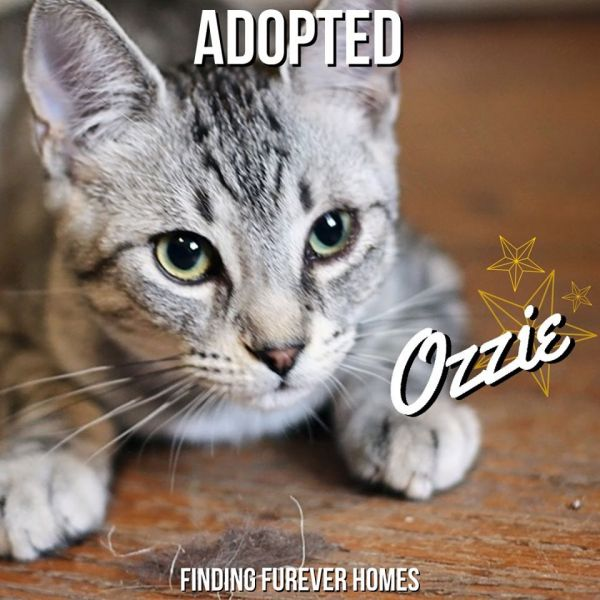 Ozzie-Adopted-on-November-24-2019-with-Harriet