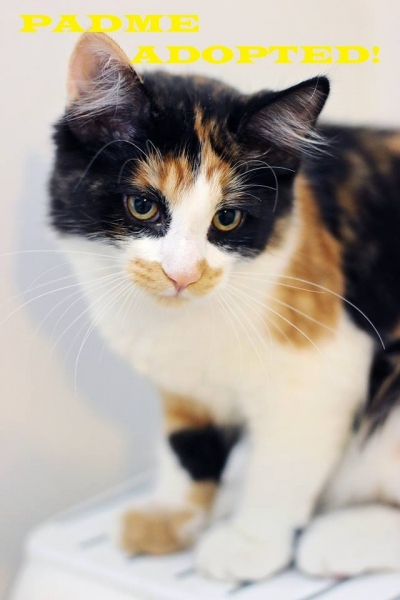 Padme - Adopted on October 20, 2018 with Neo