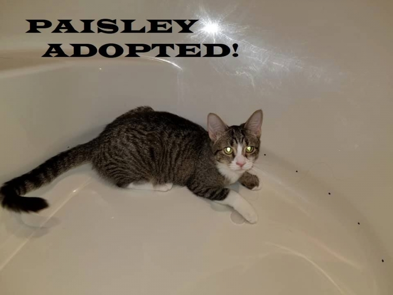 Paisley - Adopted on February 24, 2019