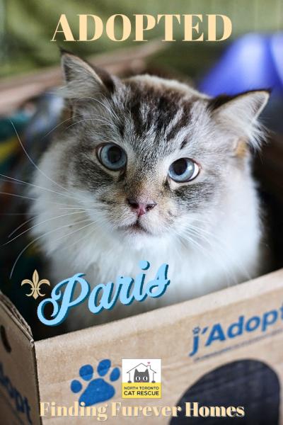 Paris-Adopted-on-November-17-2019