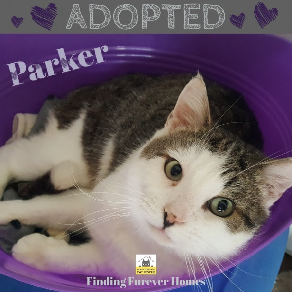 Parker-Adopted-on-June-9-2019