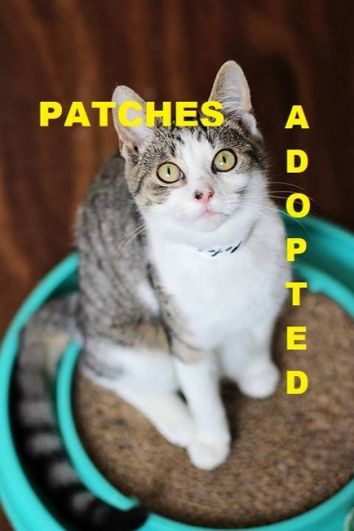 Patches - Adopted - February 17, 2018 with Peppurr