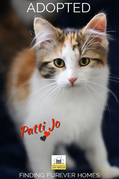 Patti-Jo-Adopted-on-February-15-2020