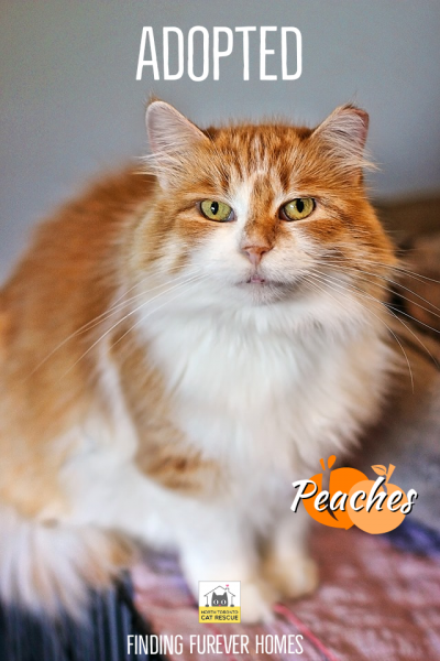 Peaches-Adopted-on-January-1-2020