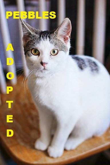 Pebbles - Adopted - March 24, 2018