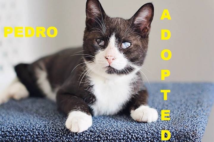 Pedro - Adopted - March 13, 2018