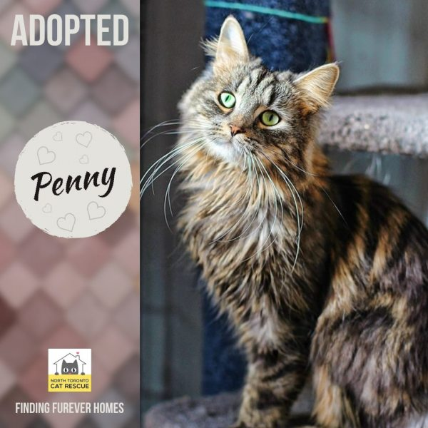 Penny-Adopted-on-May-25-2019