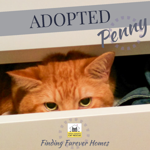 Penny-Adopted-on-October-6-2019