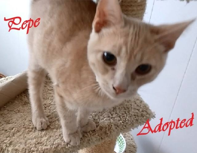 Pepe - Adopted - August 28, 2017