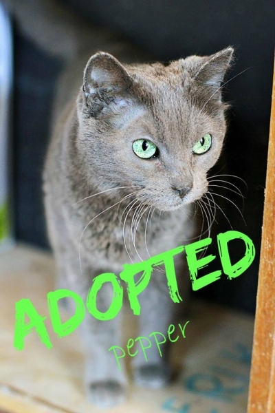 Pepper - ADOPTED - March 15,2017