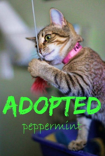 Peppermint - ADOPTED - January 21,2017