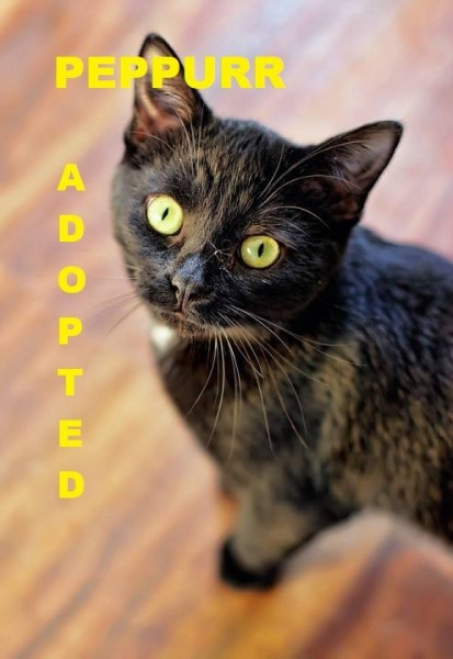 Peppurr - Adopted - February 17, 2018 with Patches