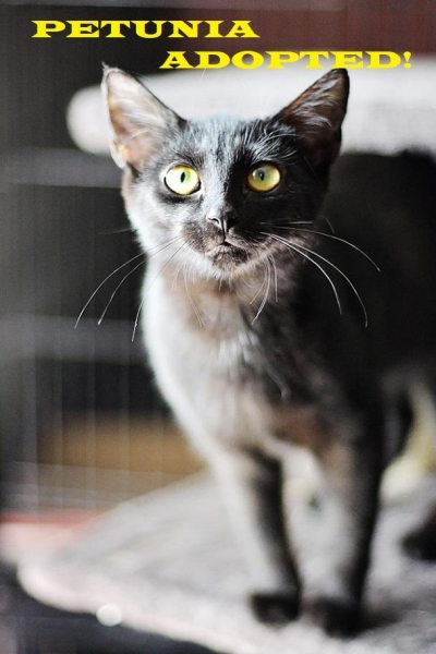Petunia - Adopted - September 20, 2018 with Enzo