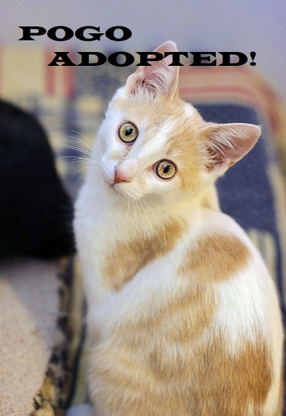 Pogo - Adopted on December 23, 2018 with Joey