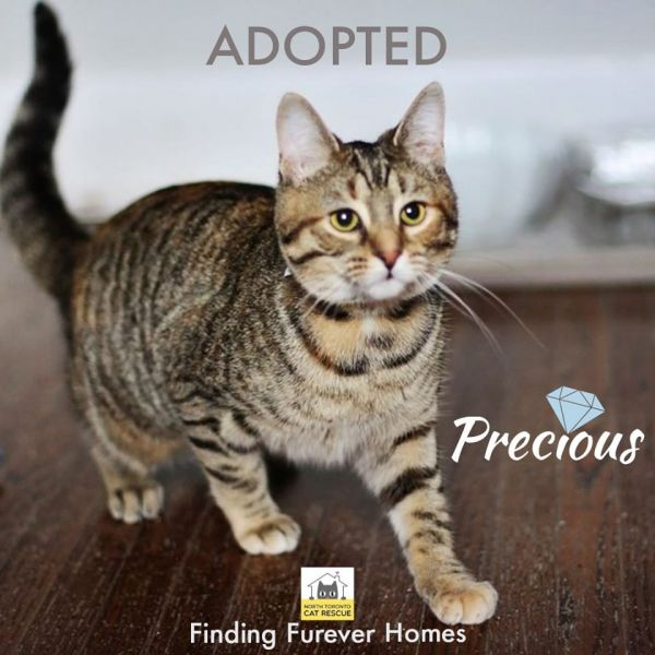 Precious-Adopted-on-February-1-2020-with-Snoopy