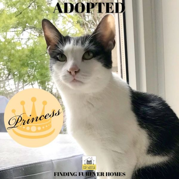 Princess-Adopted-on-April-19-2020