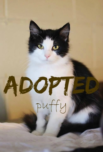 Puffy - ADOPTED - March 18,2017