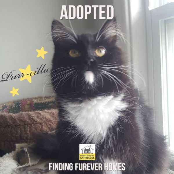 Purr-cilla-Adopted-on-April-26-2020-with-Cosmo