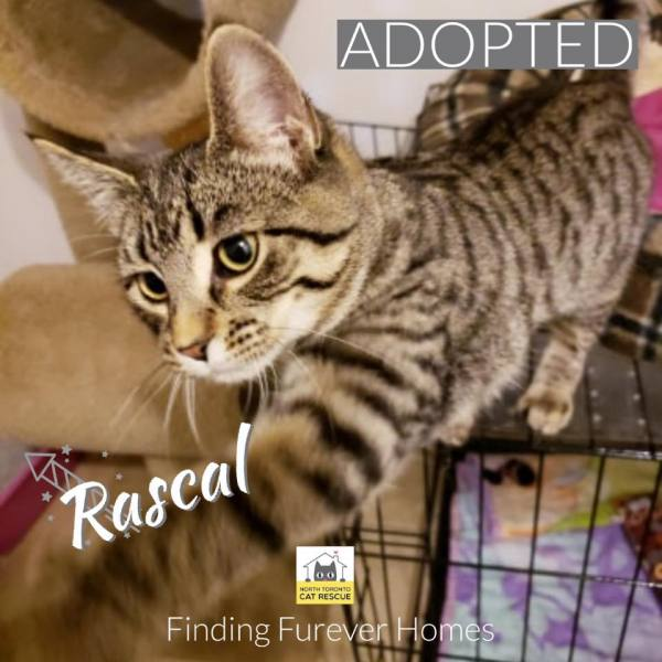 Rascal-Adopted-on-October-18-2019