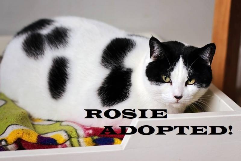 Rosie - Adopted on December 30, 2018