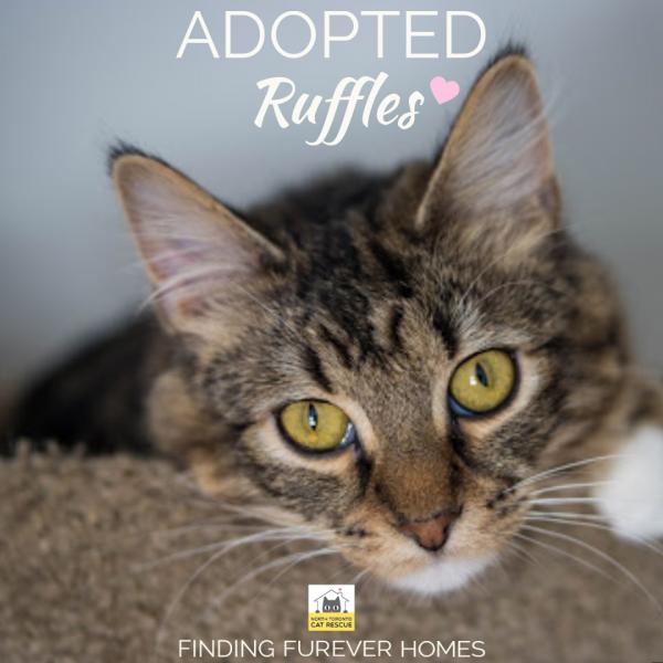 Ruffles-Adopted-on-February-15-2020