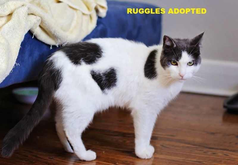 Ruggles - Adopted - November 23, 2017 with Dante