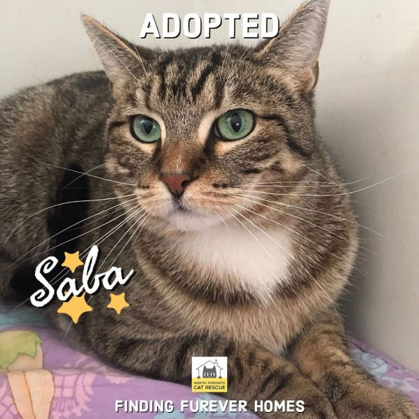 Saba-Adopted-on-March-8-2020