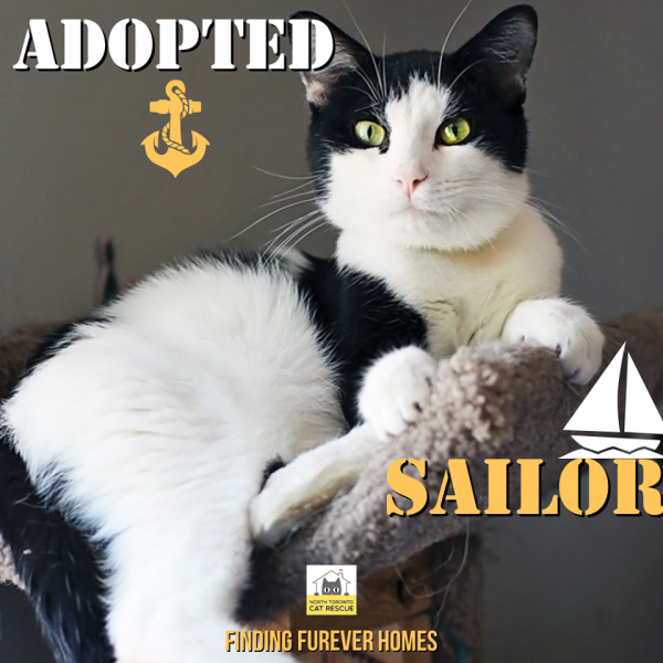 Sailor-Adopted-on-September-8-2019