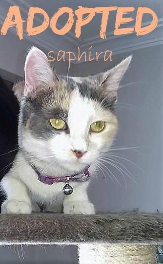 Saphira - ADOPTED - February 17,2017