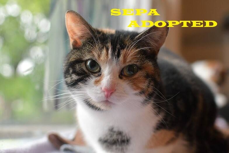 Sepa - Adopted - September 4, 2018