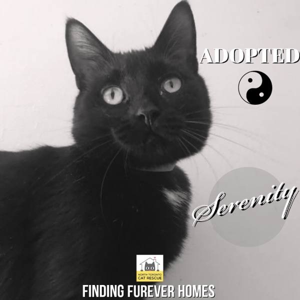 Serenity-Adopted-on-March-18-2020-with-Spike