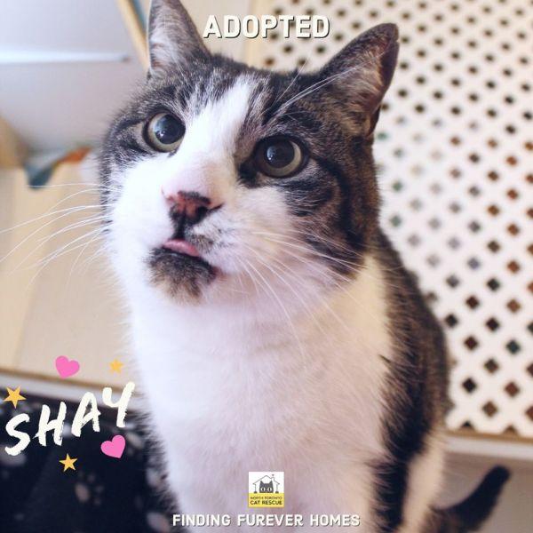 Shay-Adopted-on-May-18-2020