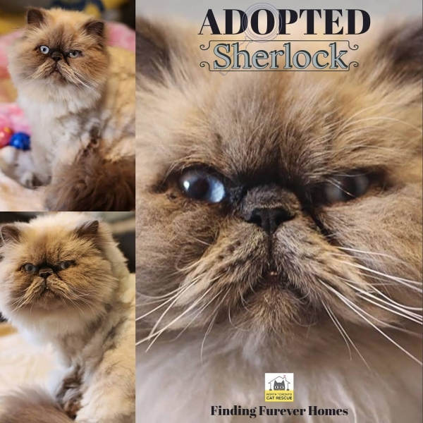 Sherlock-Adopted-on-July-16-2019