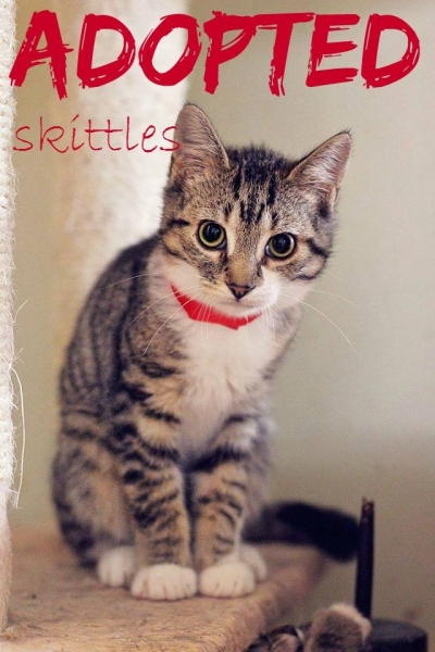 Skittles - ADOPTED - April 1,2017
