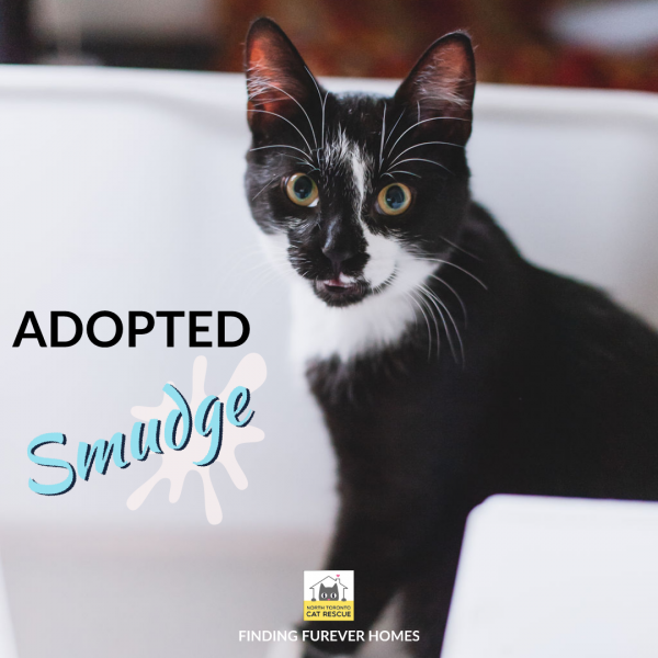 Smudge-Adopted-on-June-17-2019