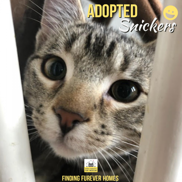 Snickers-Adopted-on-March-21-2020-with-Jorgie