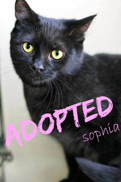 Sophia - Adopted - June 11,2017
