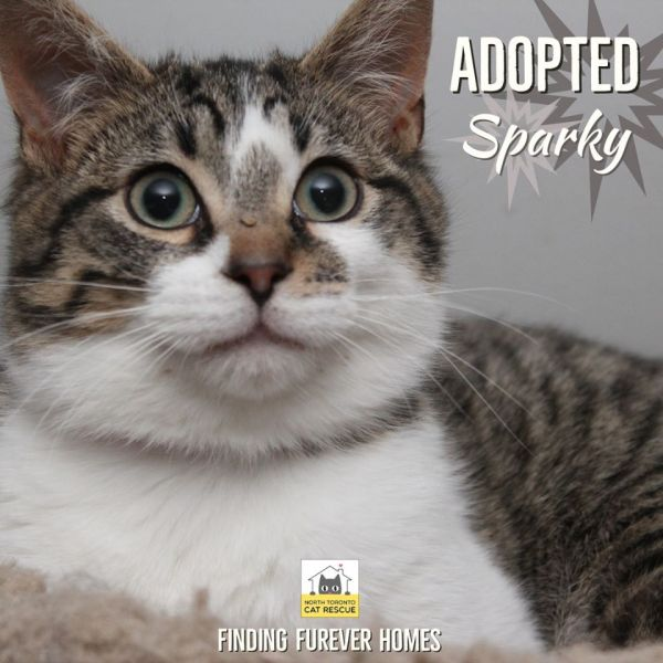 Sparky-Adopted-on-April-25-2020-with-Abby