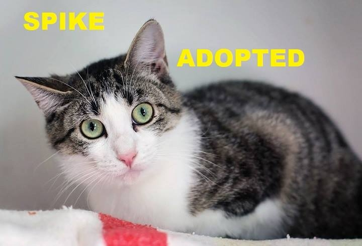 Spike - Adopted - May 5, 2018 with Faith