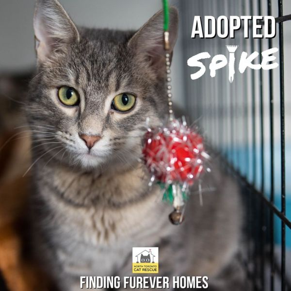 Spike-Adopted-on-March-18-2020-with-Serenity