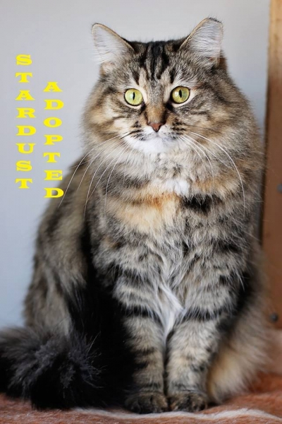 Stardust - Adopted - September 1, 2018