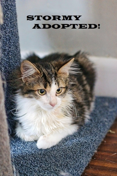 Stormy - Adopted on February 2, 2019 with Checkers