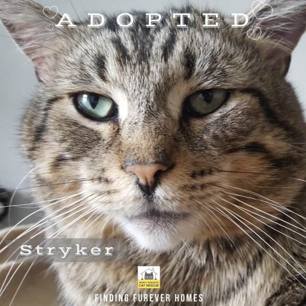 Stryker-Adopted-on-May-11-2019