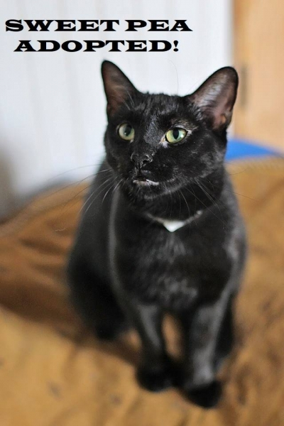 Sweet Pea - Adopted on January 20, 2019