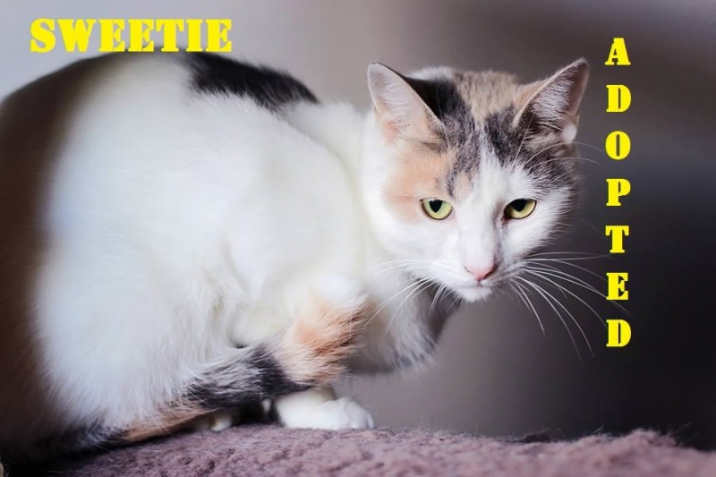 Sweetie - Adopted - November 5, 2017 with Reese