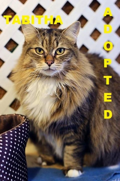 Tabitha - Adopted - April 7, 2018 with Buffy
