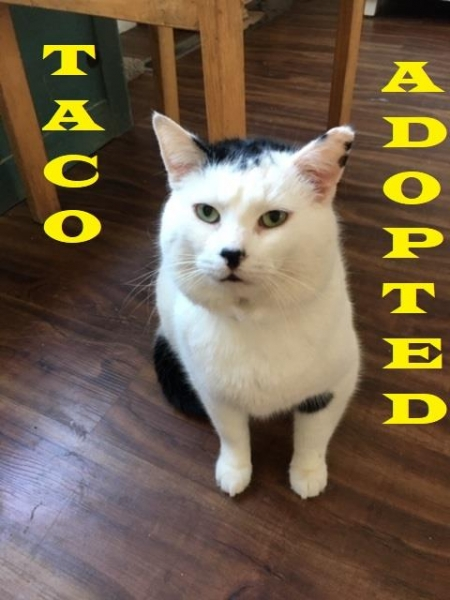 Taco-Adopted-on-March-10-2019