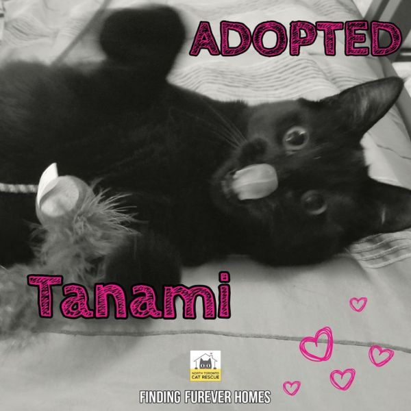 Tanami-Adopted-on-September-20-2019